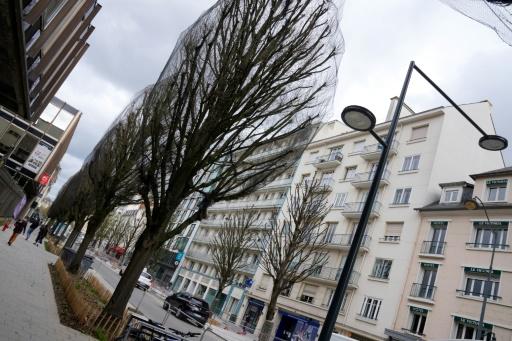 maire arbres tronçonneuses