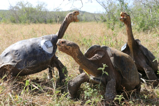tortues galapagos resistent antibiotiques