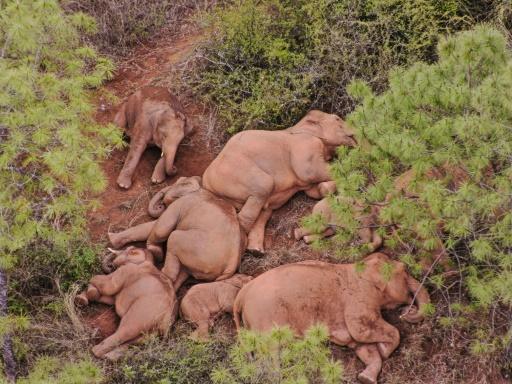 marche éléphant chine