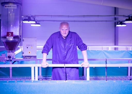 saumon aquaculutre première norvège