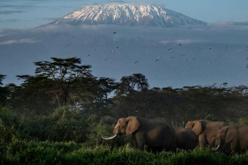 éléphants réintroduits angleterre kenya