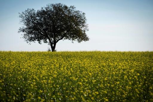 Union Européenne arbres