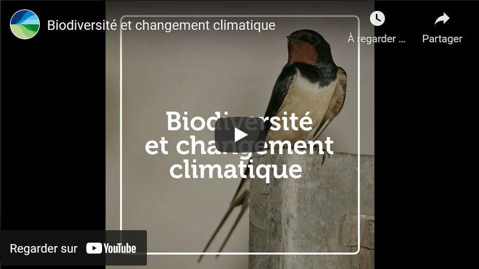 conséquences réchauffement sclimatiques sur biodiversité