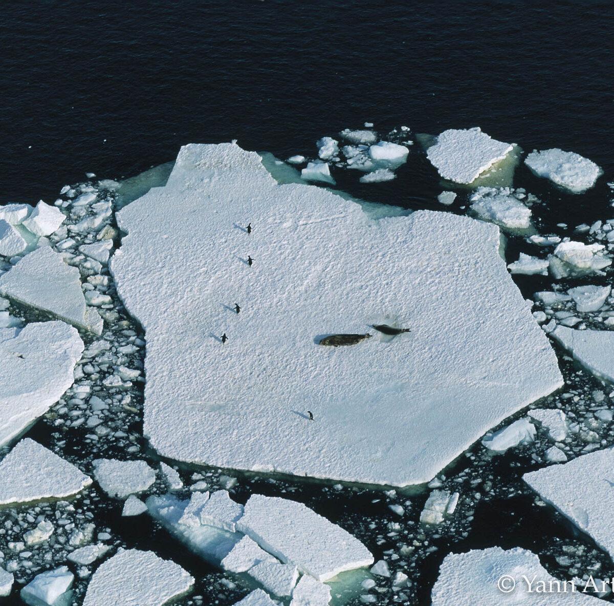 Glacier ours polaires