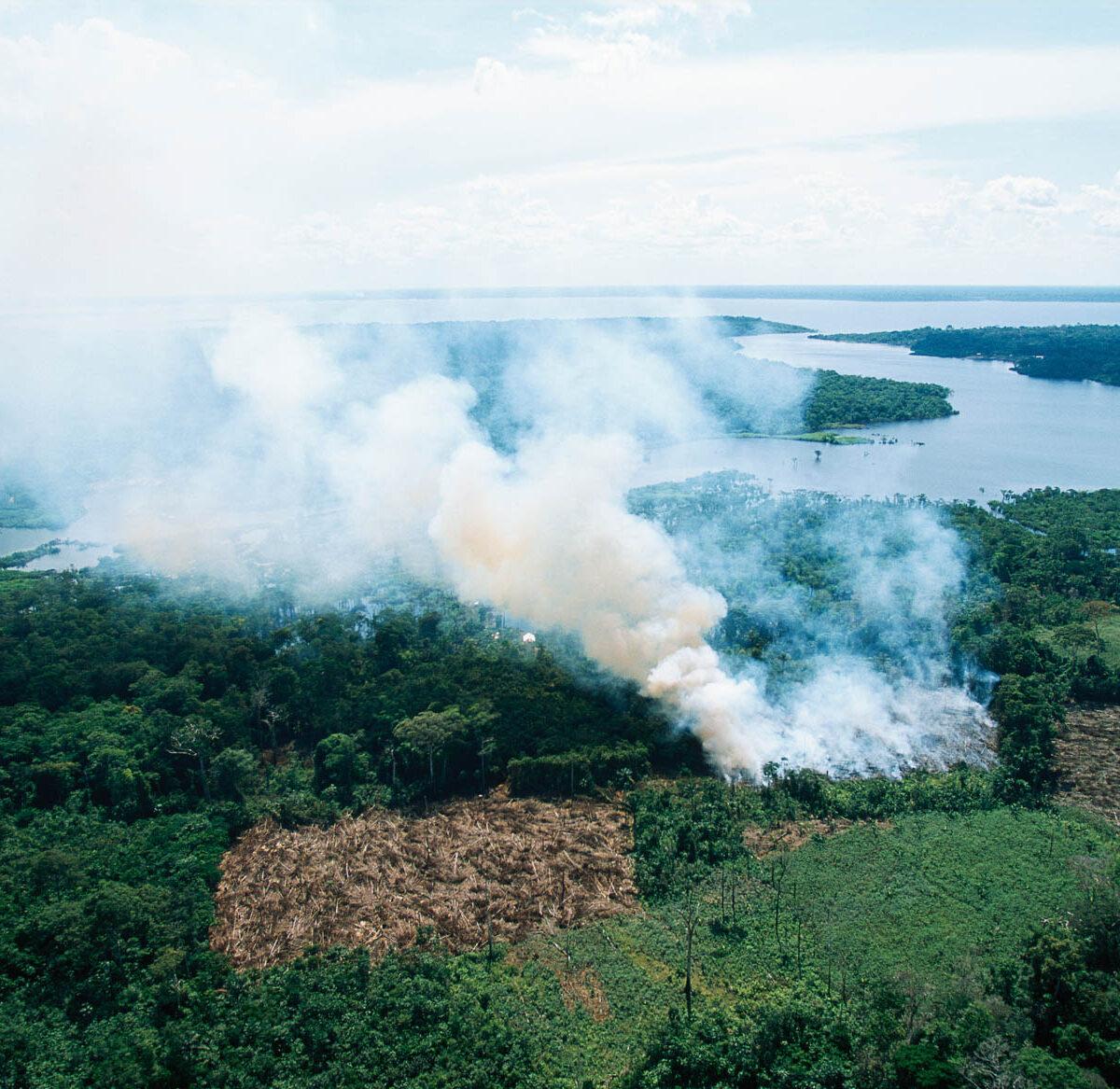déforestation aires protégées brésil