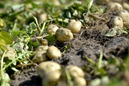 agriculture régénératrice alimentation mode
