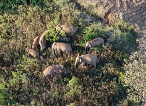 elephants réserve chine