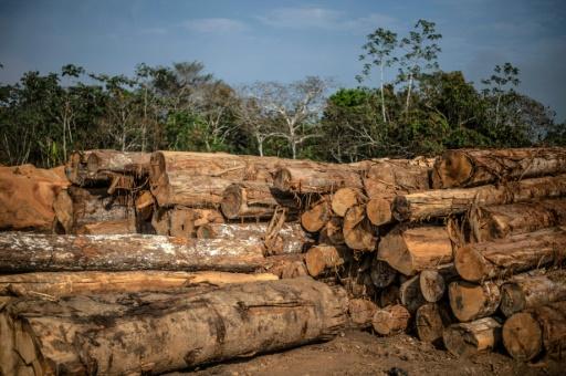 satellites surveillance déforestation
