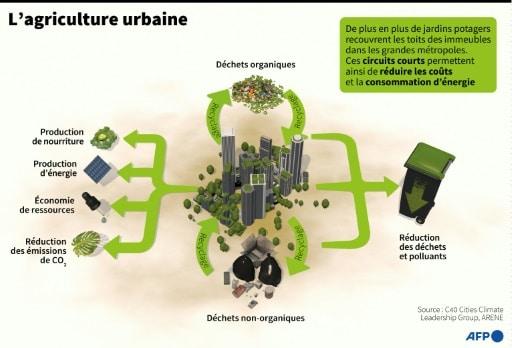 villes passent au vert agriculture urbaine schéma