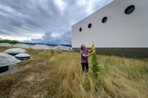 villes passent au veret toit végétalisé suisse