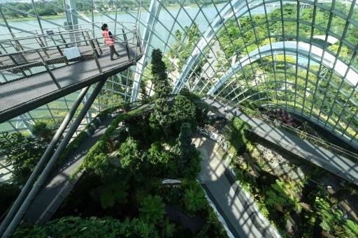villes passent au vert jardin futuriste singapour