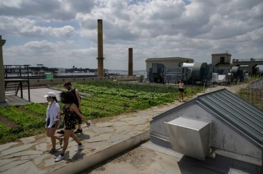 villes passent au vert culture sur toit new york etats-Unis