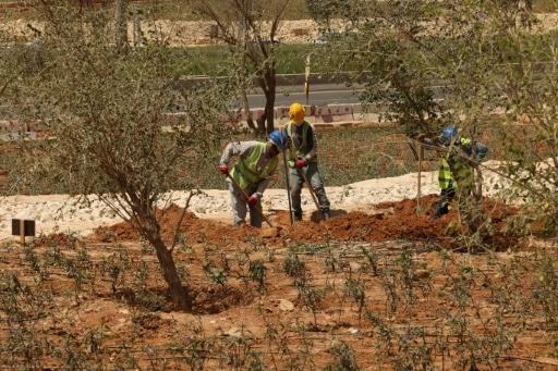 villes passent au vert reforestation riyadh