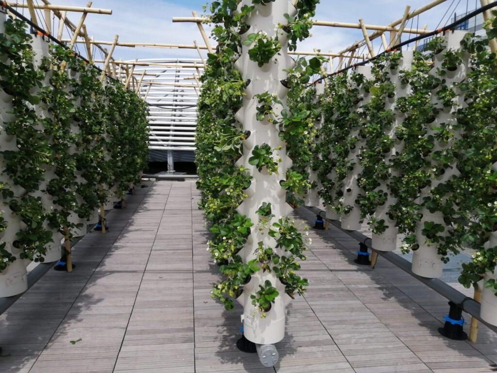 agriculture ferme urbaine