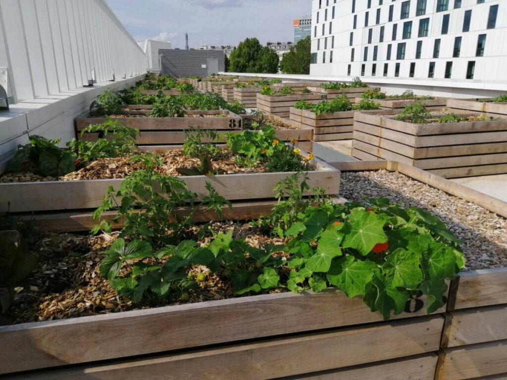 carré parisiens parcelles à louer ferme urbaine nature urbaine