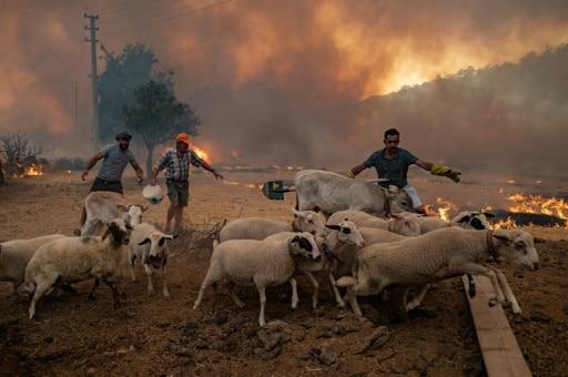 turquie animaux flammes