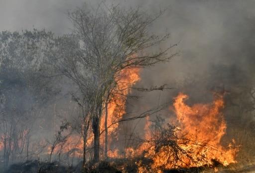 Bolivie incendies criminels réserves écologiques