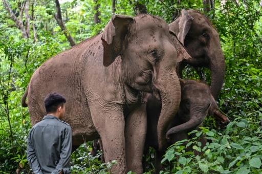chine éléphants migrations villageois