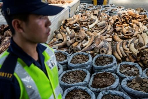 hong kong traffic animaux