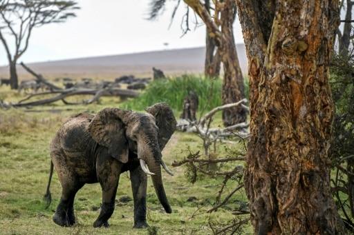 keny recensement faune
