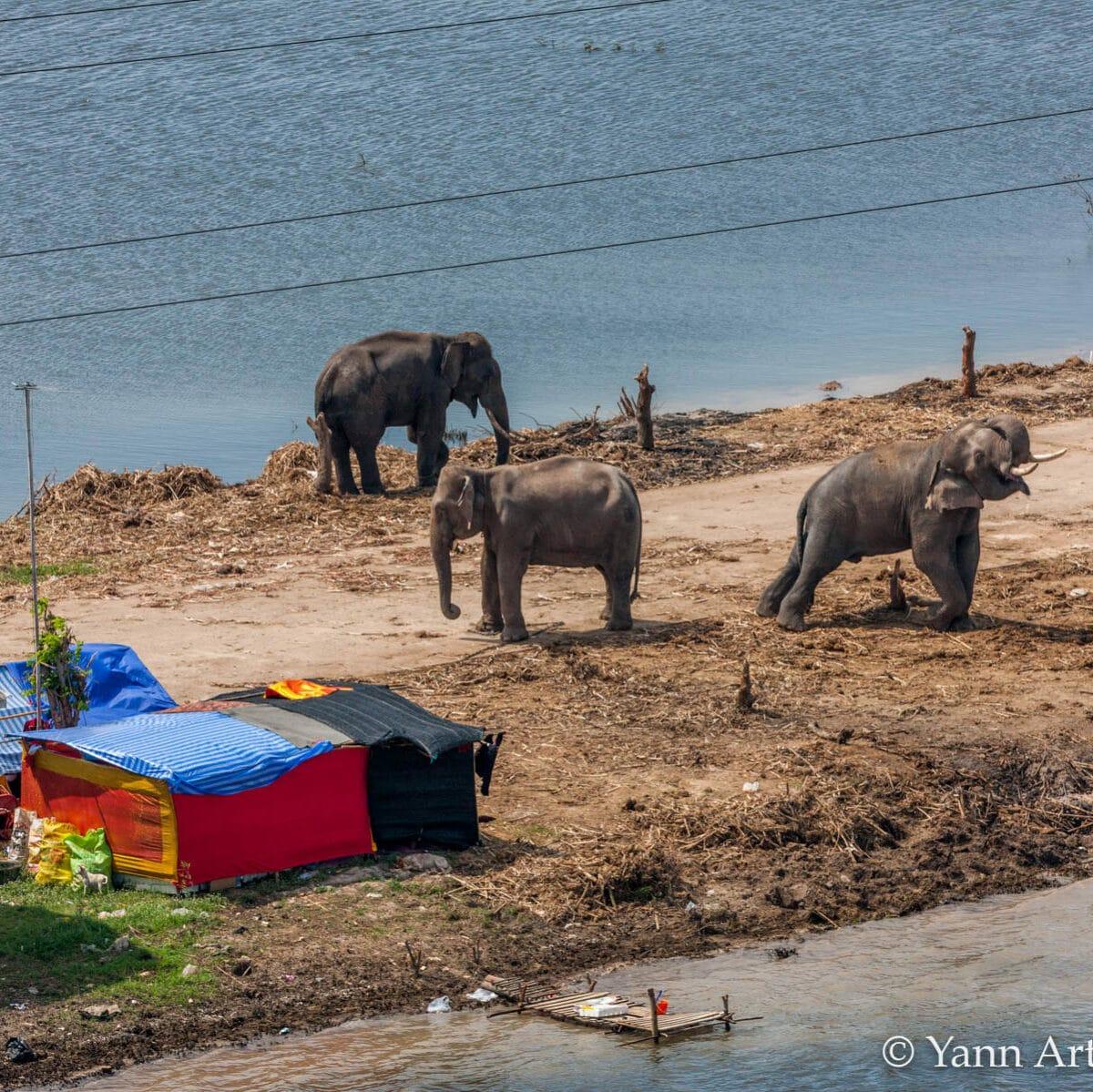 éléphants animaux humains conflits réchauffement climatique