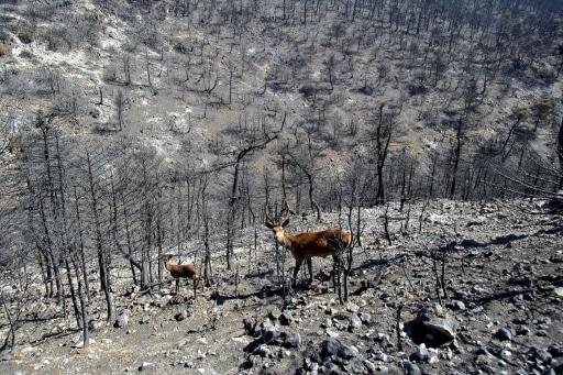 faune sauvage incendies