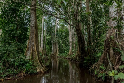 forêt marécageuse Bénin