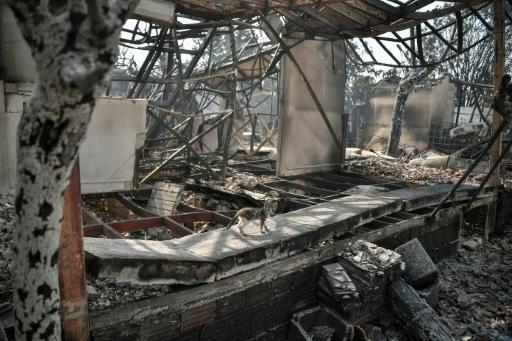 incendies athènes cendres animal