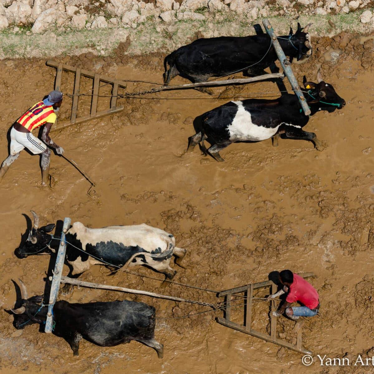 subventions agricoles monde