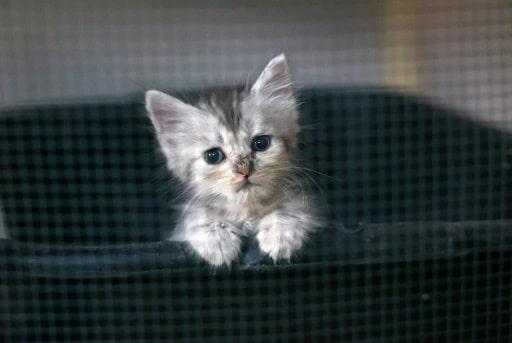 abandons chats chatons été
