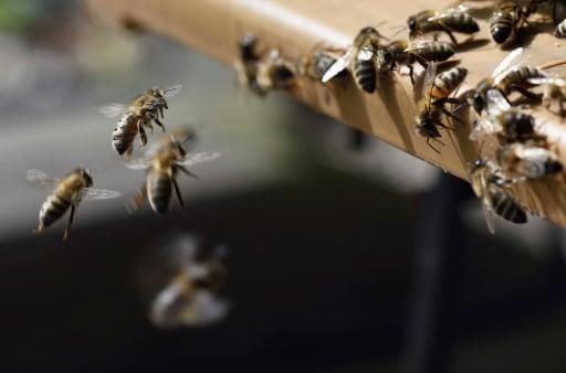 abeilles micro robot