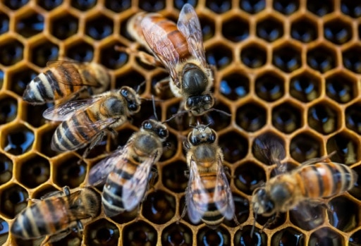 abeilles micro robots