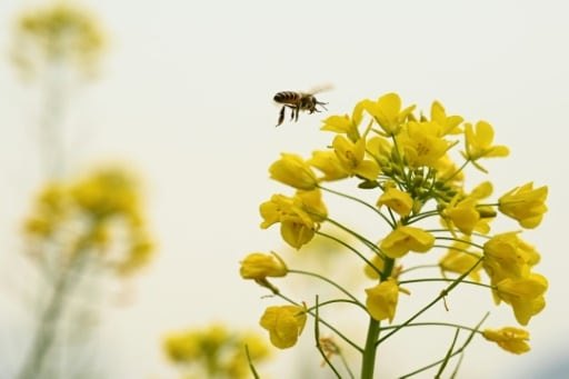 abeille micro robot