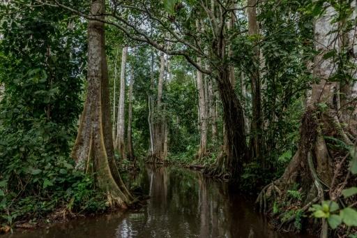 un tiers des espèces d'arbres menacés