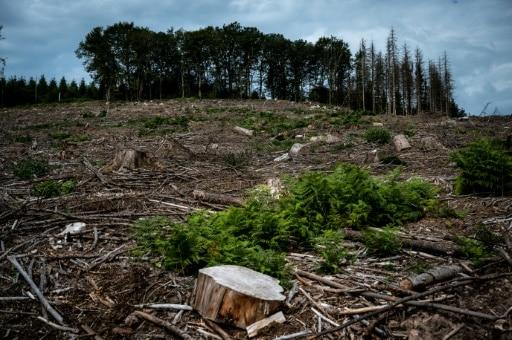 achat de la forêt pour la sauver morvan