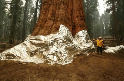 californie feu sauver forêt