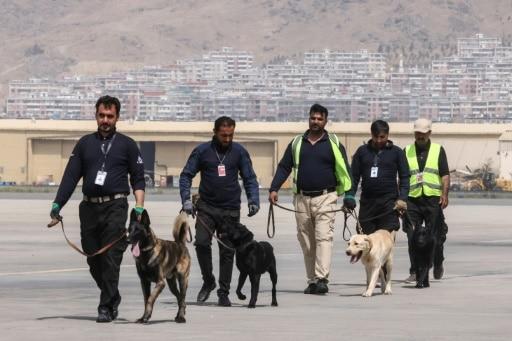 chiens kaboul abandonnés reprennent service aéroport