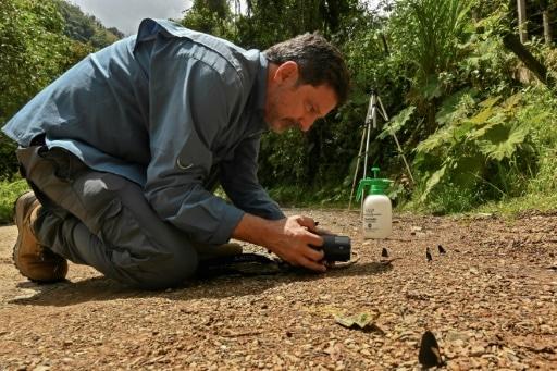colombie recensement papillons