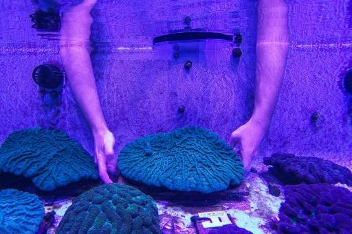 coraux soigner floride