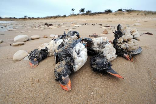 oiseaux marins et tempêtes