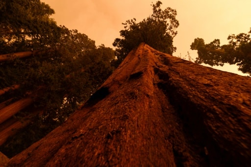 séquoias protection incendies