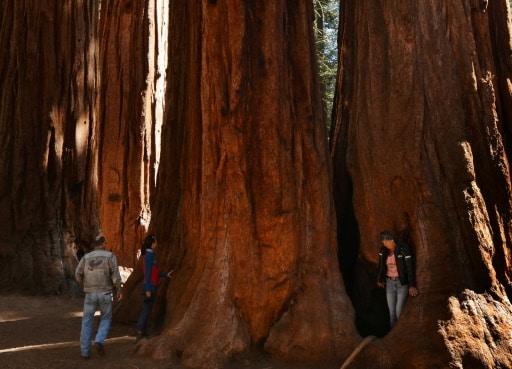 séquoias aluminium protection feux