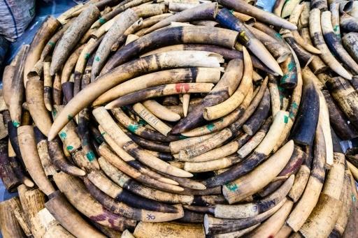 traficants d'ivoire