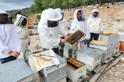 MIEL TURQue miel de pins