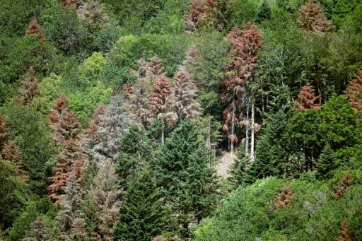 changement climatique forêt